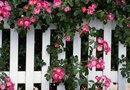 How to Fancy Up a White Picket Fence