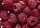 Can You Dig Up Raspberries in Fall & Replant Them in Spring?
