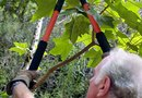 How to Sharpen a Tree Pruner Blade