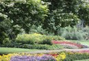 How to Design a Perennial Garden With Shrubs