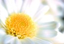 What Do Daisies Need to Live?