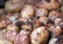 How to Grow Cuttings Using a Potato