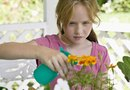 Ingredients for Making Natural Insect Repellents for Outdoor Plants