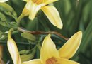 Can I Use Weedkillers in My Day Lily Garden?