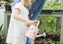 Non-Poisonous Plants for Children to Grow