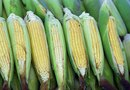 How to Identify Ripe Corn