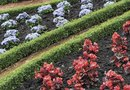 Low-Lying Shrubs for Borders