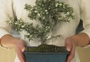 How to Mix Bonsai Soil