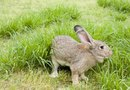 Plants That Rabbits Avoid
