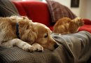 How to Get Rid of Dog Hair Embedded in the Couch Cushions