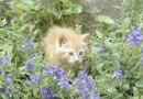 Is Blue Fescue Grass Poisonous to Cats?