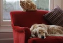 How to Make a Dog Sofa