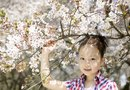How Long Does It Take to Grow or Raise Cherry Blossoms?