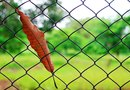 How to Clean Rusted Chain Link Fences