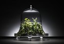 Closed Terrarium Plants