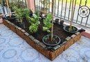 How to Garden Vegetables in Containers or Raised Beds