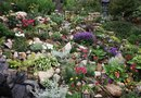 Plants for Rockery Gardens