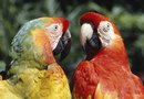 Safe Houseplants for Parrots