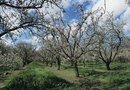 Plum Trees That Do Not Produce Plums