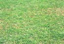 When Should Crabgrass Preventer be Applied?