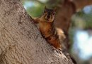 Squirrel Problems in Pecan Trees