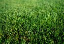 How to Repair Brown Spots in Grass