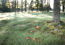 How to Kill Mushrooms Encircling a Tree