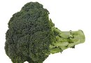 How Should Broccoli Seed Harvesting Be Done?
