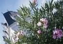 How to Promote Blooming in Oleander Shrubs