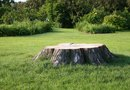 How to Make a Hole in a Stump