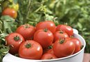 How to Feed Tomato Plants Nitrogen Organically