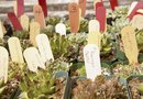 How to Plant Succulents in a Large Seashell