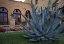 Is Agave Poisonous?