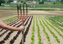 How to Make Rows in a Vegetable Garden