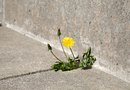 How to Stop Grass From Growing in Concrete