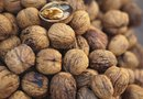 How to Prevent a Walnut Tree From Flowering