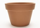 Guide for Plant Pot Sizes