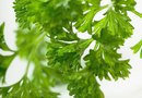 The Potassium in Parsley