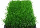 How Does Grass Grow on Bricks?