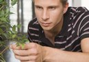 How to Kill Gnats on Indoor Plants