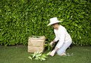 How to Fill Lawn Bags