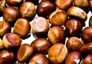 Instructions on How to Plant a Chestnut Tree