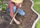 How to Fertilize Through Landscape Fabric