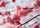 How to Decorate a Living Room With Cherry Blossoms