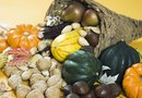 How to Grow Gourds and Conserve Them Properly