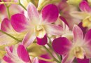 Easy Care Guide for Orchids