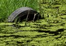 Pond Aeration & Algae Growth