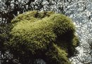 What Is a Good Time to Kill Moss in Your Yard?