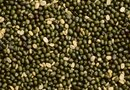 How to Plant Mung Bean