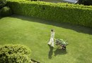 Evergreen Privacy Hedge Landscaping Ideas